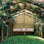 Mooi die rozen