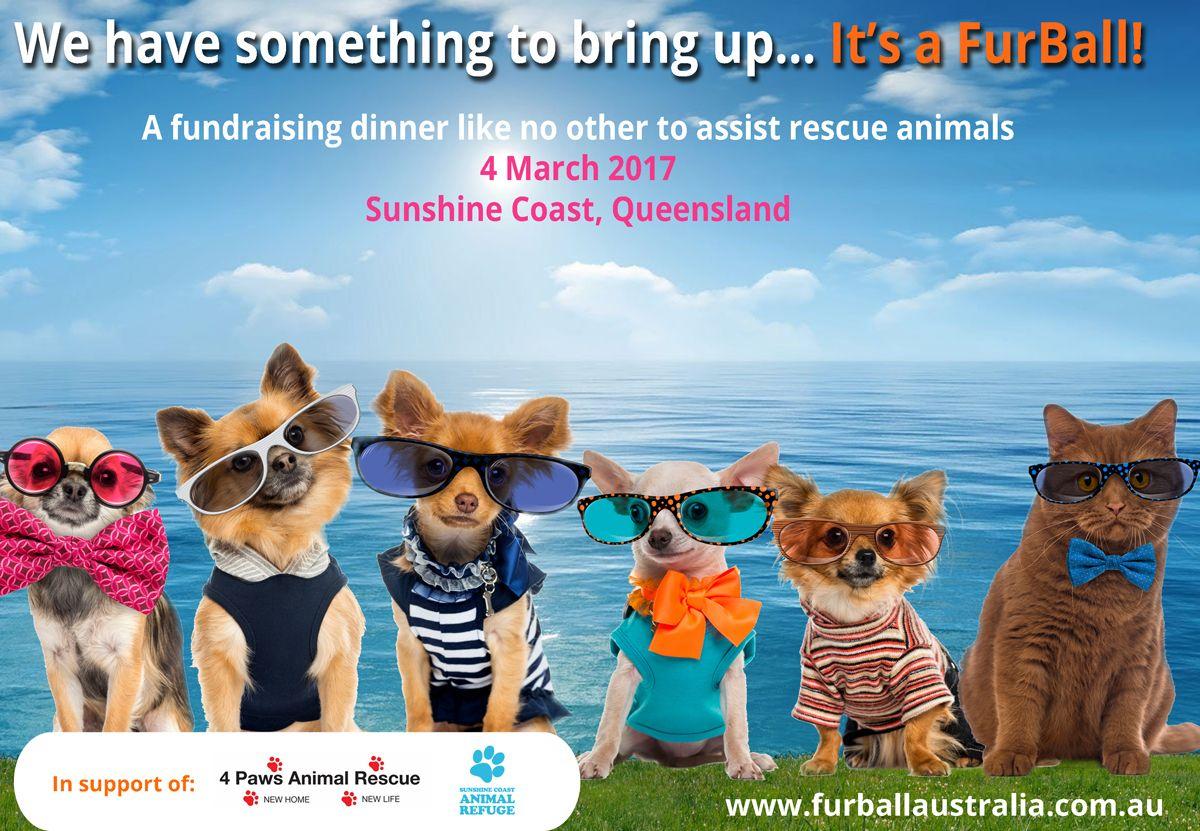 FurBall on the Beach Rescue Fundraiser March 4 Furball