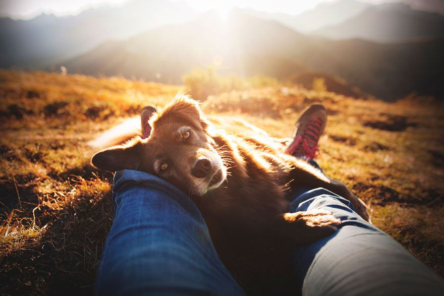 Here Are 30 Best Dog Photos Of The Year 2019 And They Are Pawsome Dog Photograph Dog Photos Dog Charities