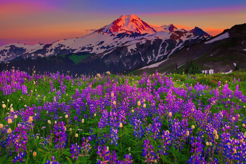 Mountain Wildflowers 1533074 Jpg 3000 2000 Landscape Photography Landscape Wild Flowers