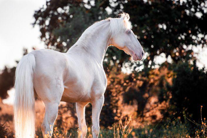 Pin Auf Horses 3
