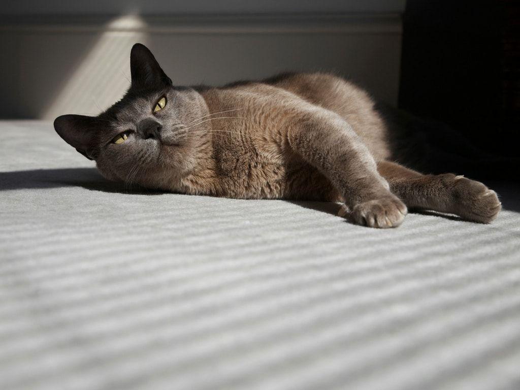 Die 7 Genialsten Tipps Fur Katzenbesitzer Haushaltsfee Org Katzen Rassen Katzen Coole Katzen