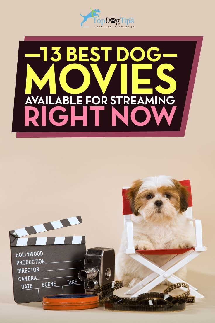 13 Best Dog Movies Available For Streaming Right Now Best Dogs Dogs Movies