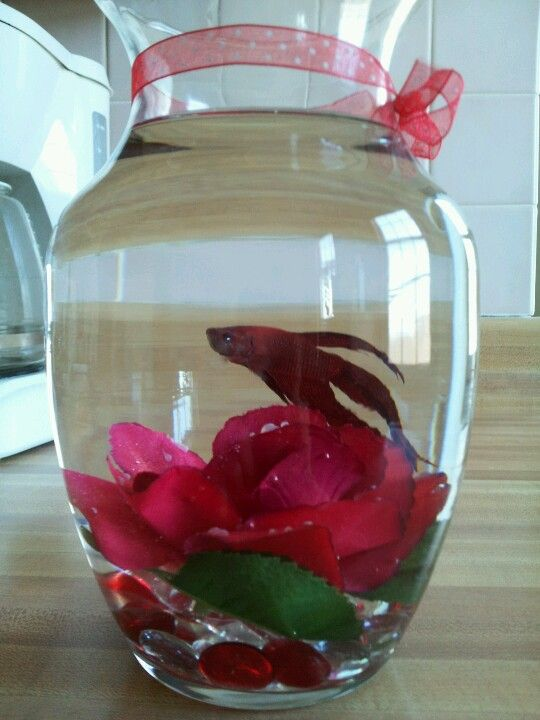 What A Fun Valentines Day Gift All Red Betta Fish And Silk Rose In