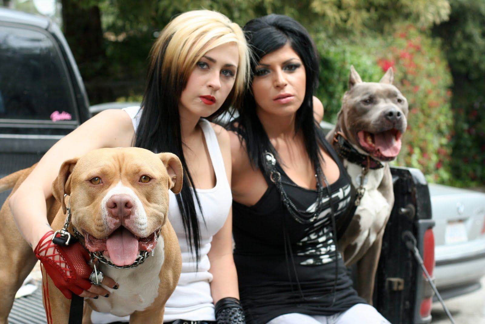 Villalobos Crew And Personal Dogs Mariah Harmony Torres And Tania Torres Pitbulls Pit Bulls Parolees Pit Bulls