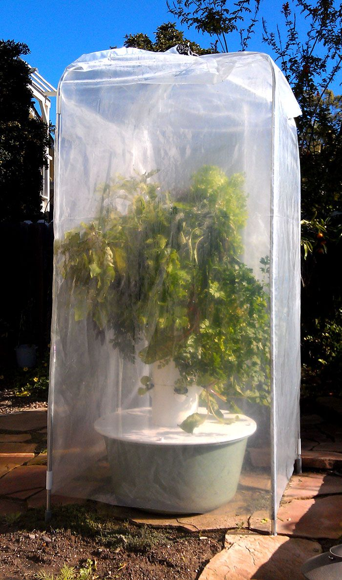 Tower Garden Season Extender And Edible Plant Protection Accessories Seedlings