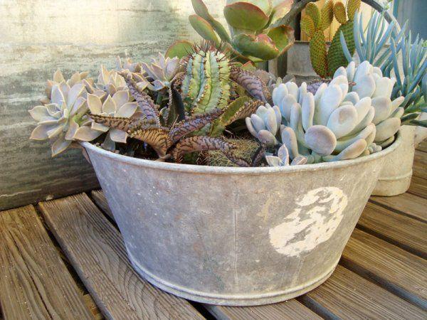 Pots Et Plantes Le Bon Accord Succulentes Deco Plante Grasse