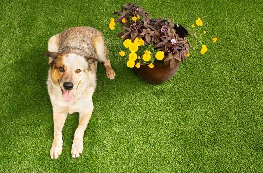 Bow Wow Turf Rugs Pet Turf Artificial Grass For Dogs Pet Friendly Flooring