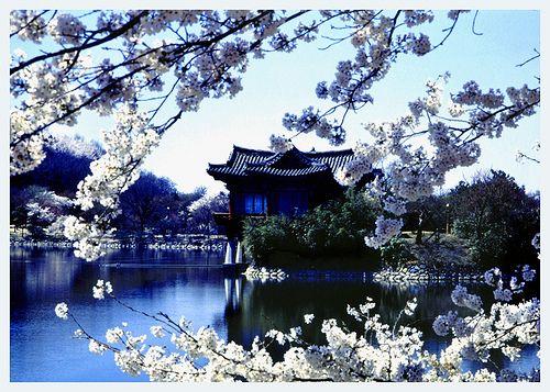 Korea Spring Landscape Beautiful Places Pinterest Korea South Korea And Beautiful Places