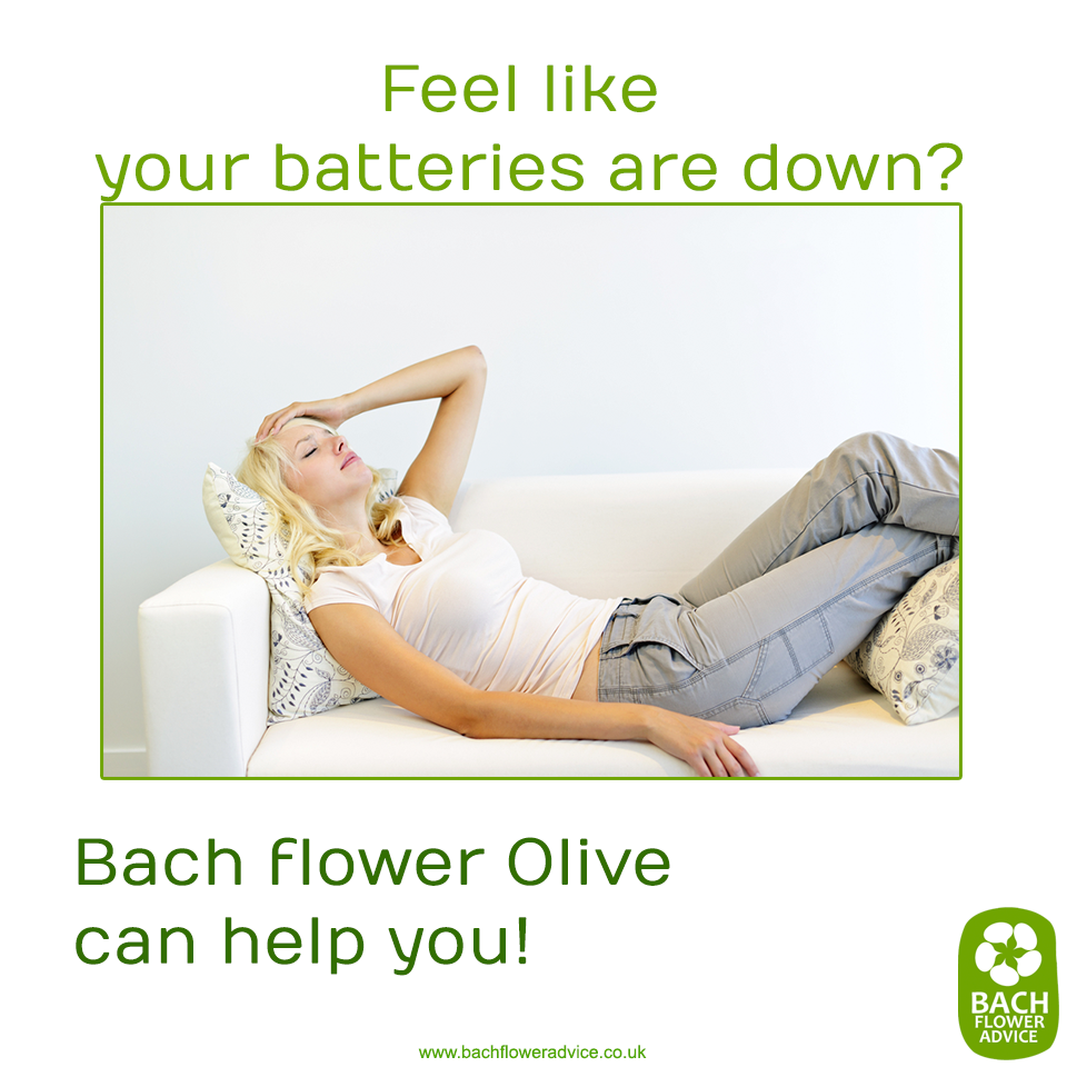 Feel like your batteries are down? Bach flower Olive can help you! #olive #bachflowerremedies