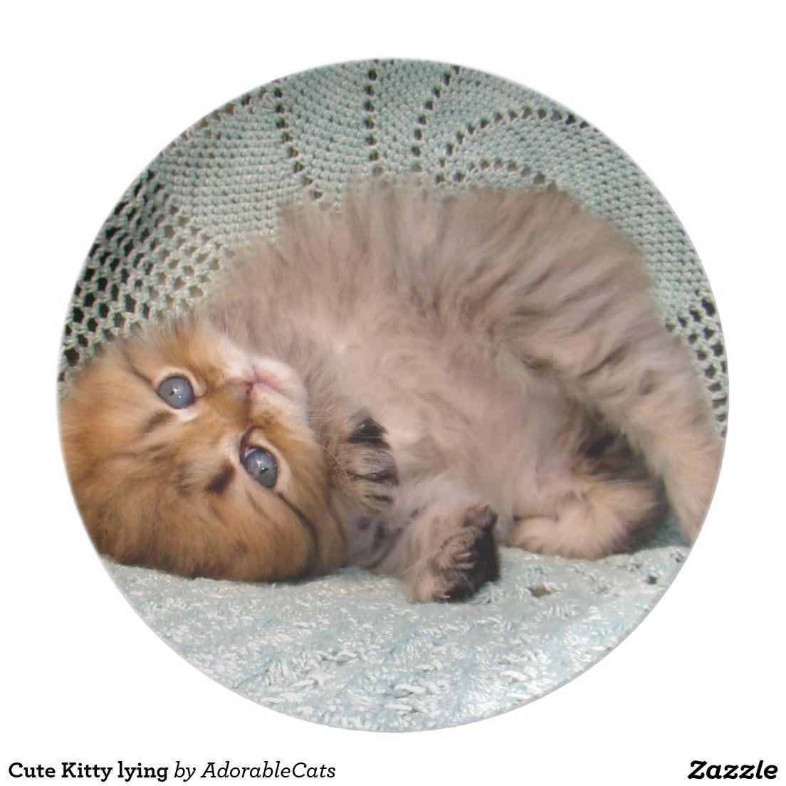 Craftsandacat Com Cat Care Sick Cat Cat Toys