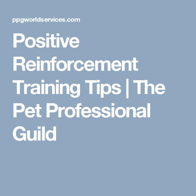Positive Reinforcement Training Tips
