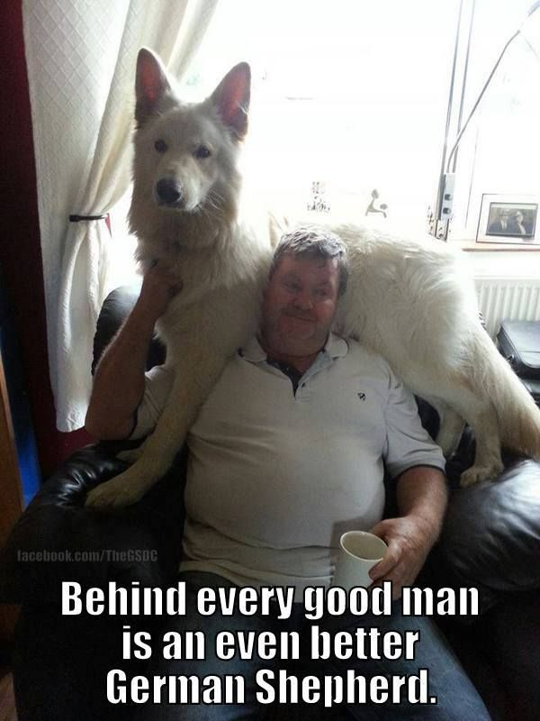.truth =) #german #shepherd #dog