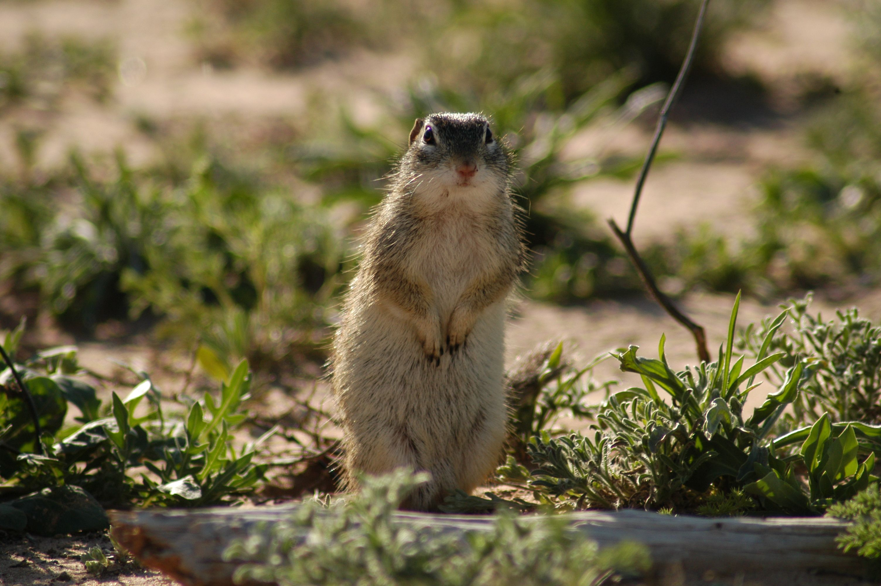 ground squirrels are the only species to truly hibernate