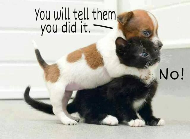 Baby Animal Fight Club Cute Animals Kittens Puppies Pets