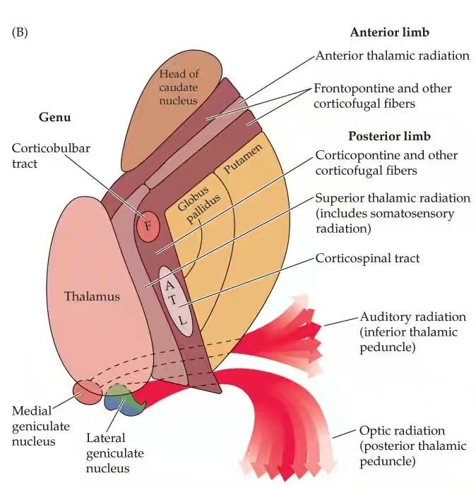 Imagen relacionada | Medicine | Pinterest | Radiología