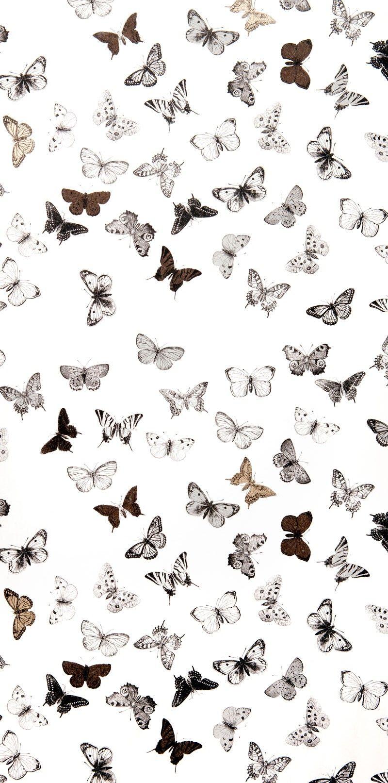 Wallpaper Butterfly White Blac Wallpaper Collection Butterfly Wallpaper Iphone Iphone Wallpaper Vintage Butterfly Wallpaper