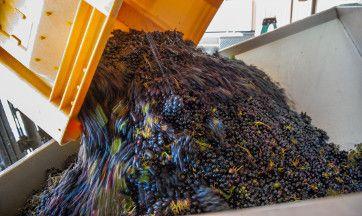 5 Ways to Celebrate the Grape Harvest in Fredericksburg