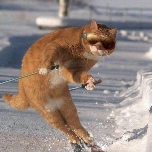 Cool cat skiing