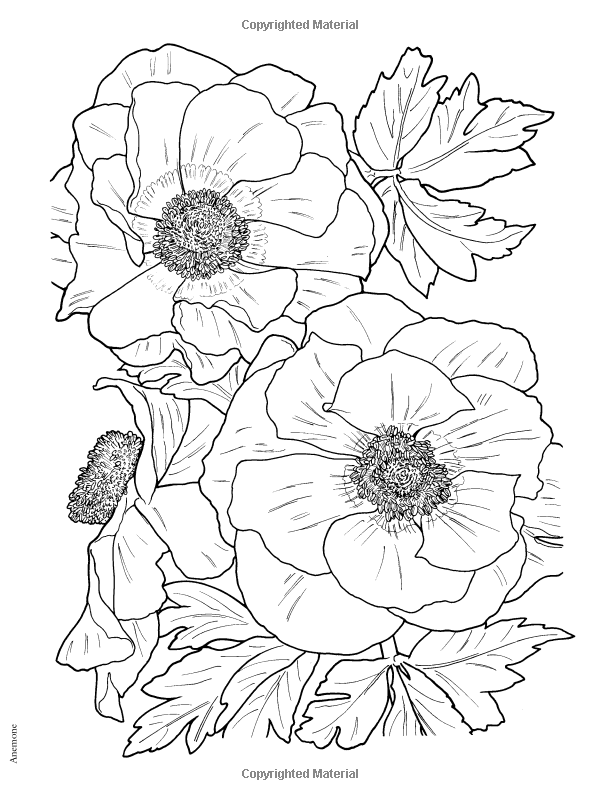 Robot Check Flower Coloring Pages Flower Drawing Coloring Pages
