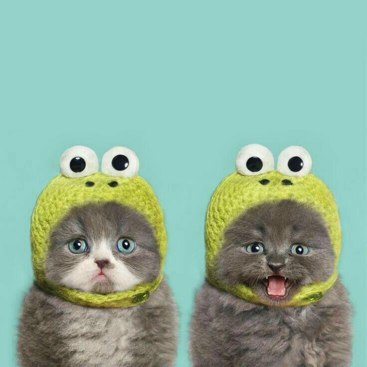 Siamo i gattini più buffi al mondo....