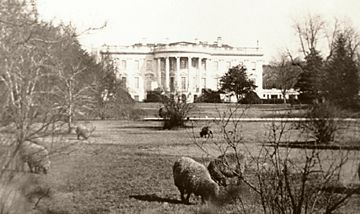 Woodrow Wilson had a ram and sheep that occupied the White House lawn during his time in office.