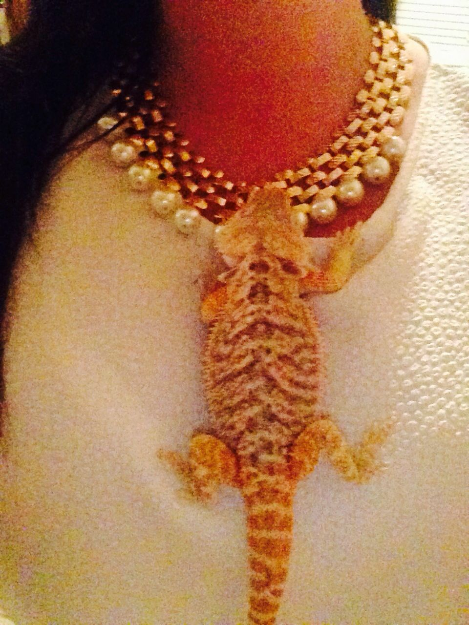 Bearded dragons and pearls   Beardie Beardzly   Pinterest