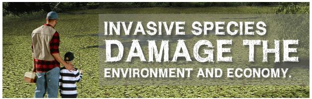 Texas Invasive Plants