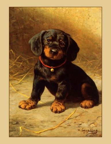 Canvas art print of Black Dachsund Puppy with Red Collar/Bell Canine