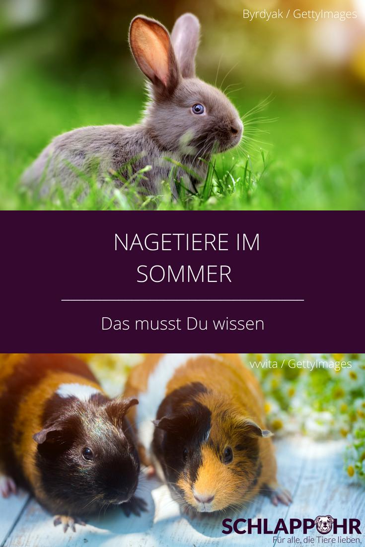 Nagetiere Im Sommer Nagetiere Kaninchen Meerschweinchen