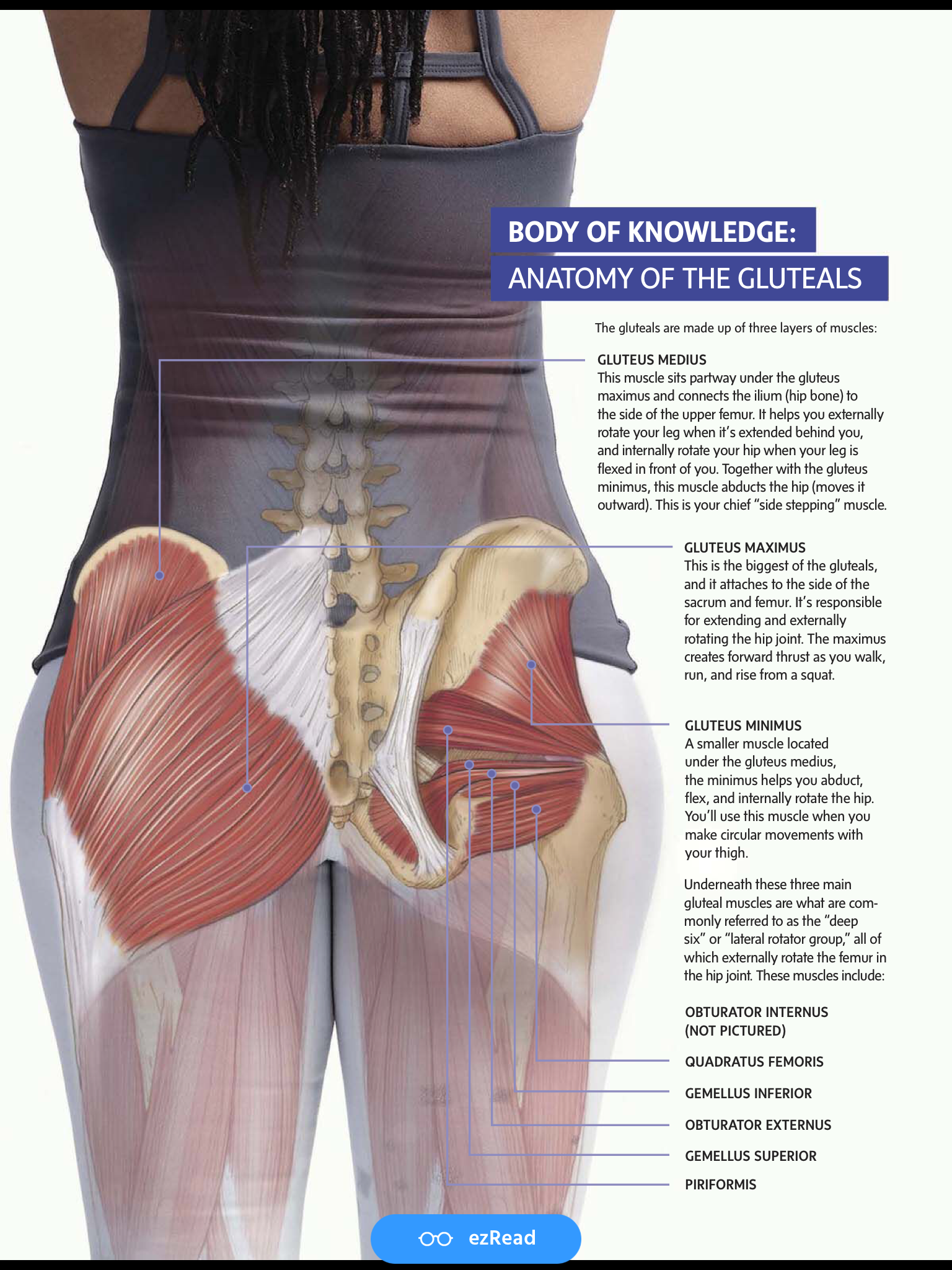 40+ Where is the gluteus medius inspirations
