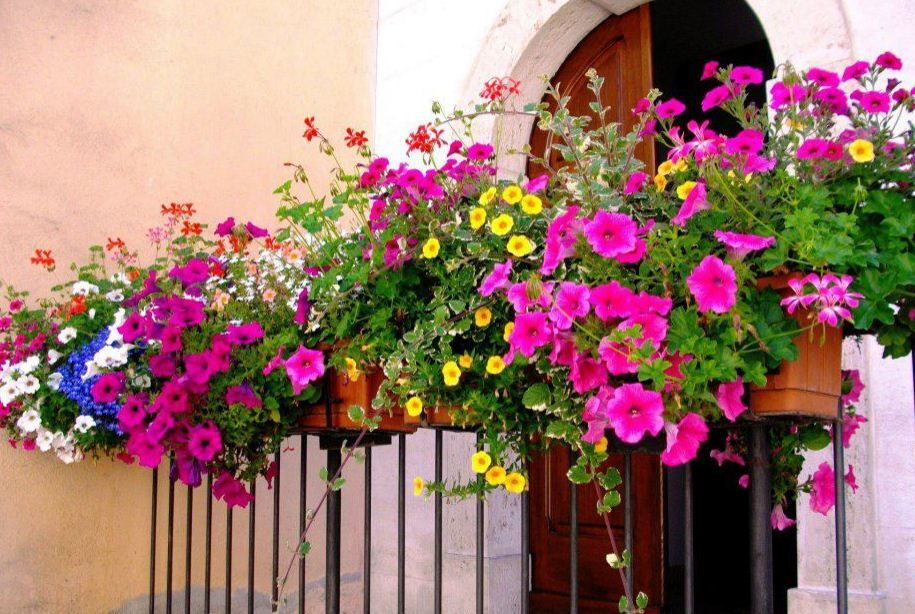 Rengarenk Balkon Çiçekleri | Balkon, Çiçek, Balkon çiçekleri