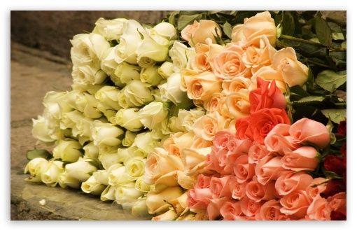 Bunch Of Roses.... Pretty pretty....