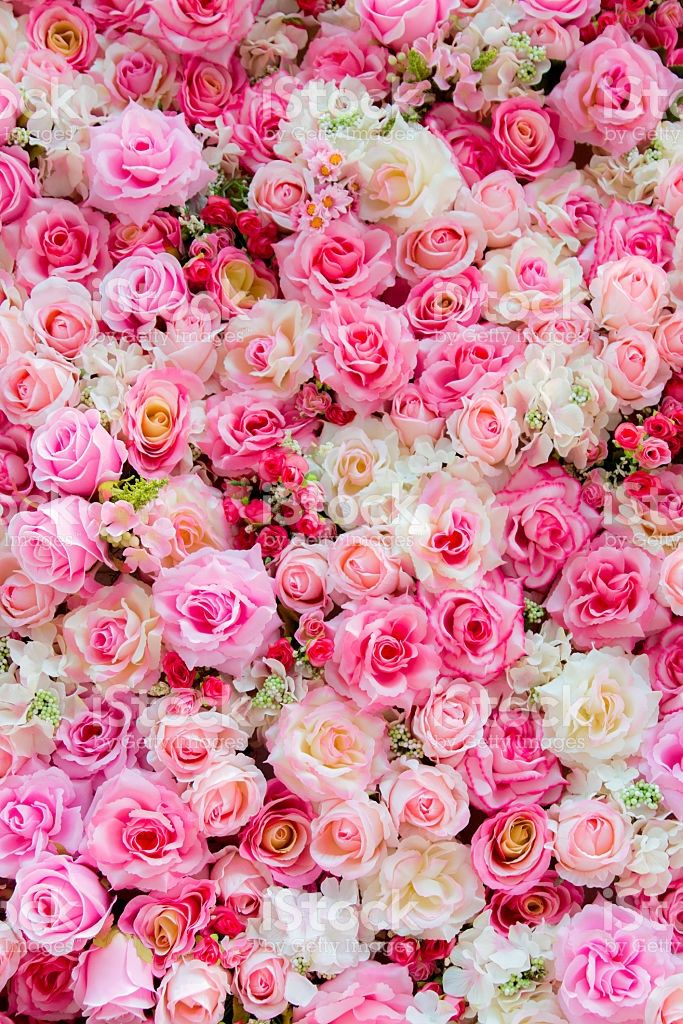 Roses Background For Backdrop Background Wallpaper And Etc