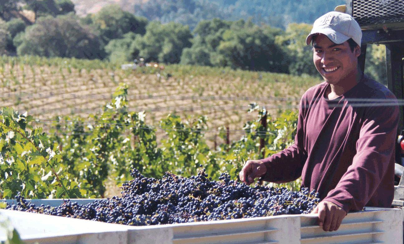 Cabernet Sauvignon    Wine Varietals   Gold Medal Wine Club