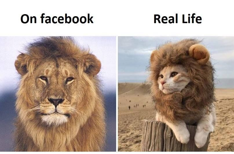 On Facebook Vs Real Life Social Media Really Funny Pictures Funny Animal Memes Animal Memes