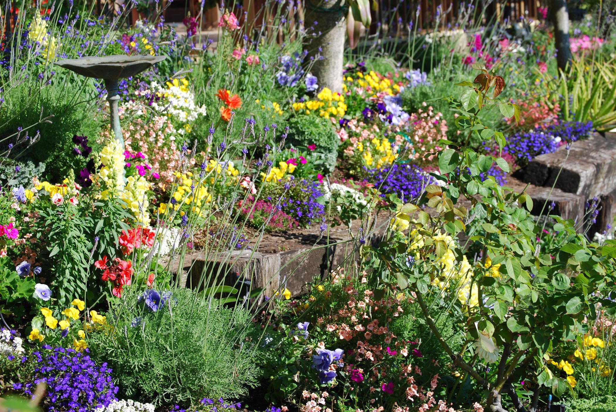 Sebring Florida Garden Plants Flower Photos Garden