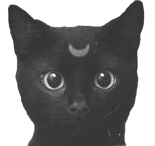 I Want Cat Face Drawing Tumblr Png Cats Tumblr