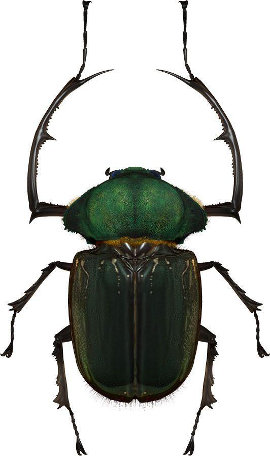 カナブン 日本の画像検索結果 Insect Pinterest カナブン と 虫
