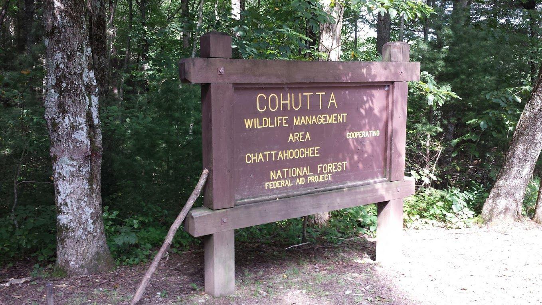 Cohutta Wilderness Area - Almost 38,000 acres of fun!