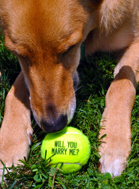 Cute Tennis Marriage Proposal Ideas Dog Proposal Wedding