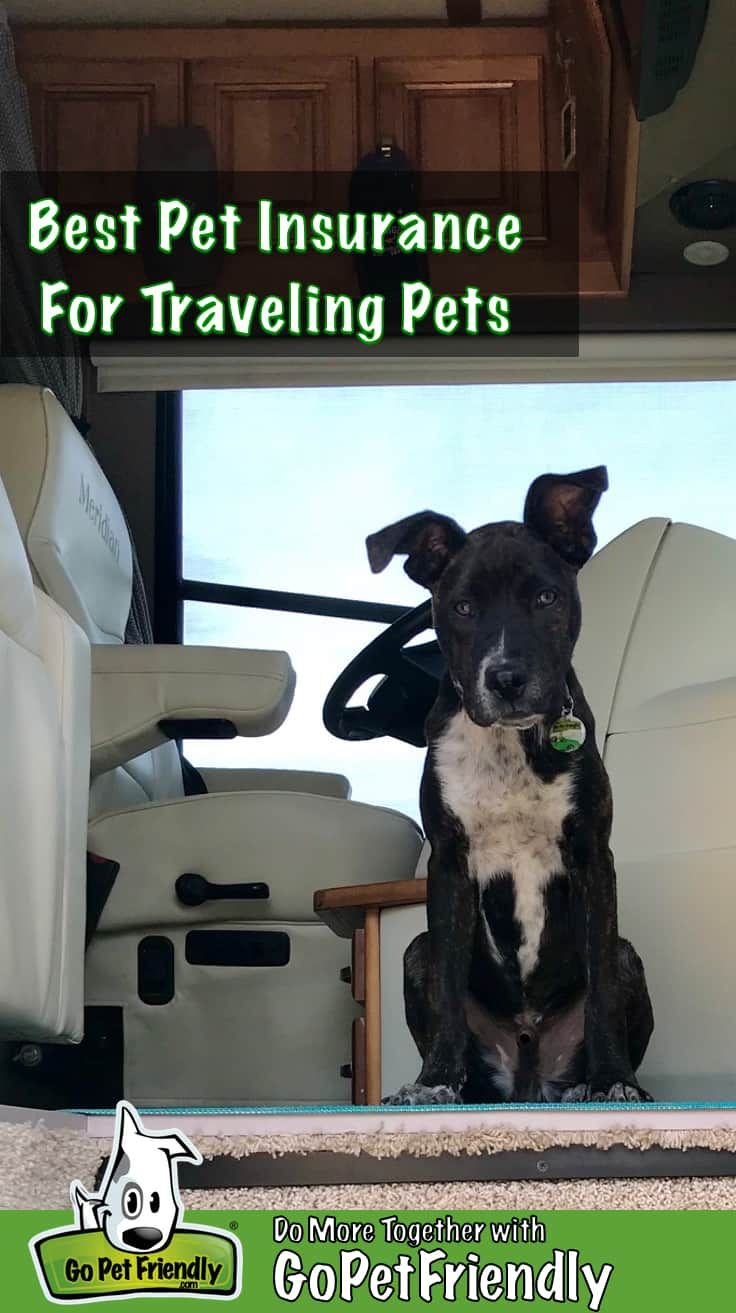 Best pet insurance for traveling pets