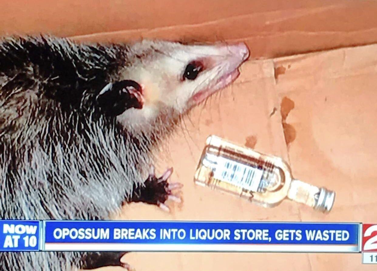 Florida where opossums go to retire funny pinterest