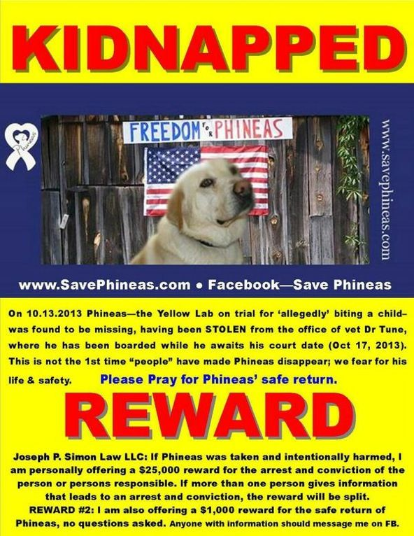 Stolen Yellow Lab In Salem Mo Save Phineas Help Lost Dog