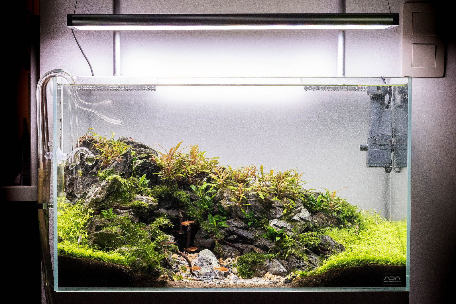 Ada 60p Mighty Cave Aquascape Aquascape Design Aquascape Aquarium