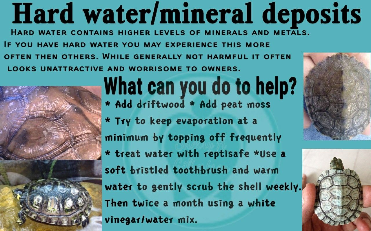 Hard water and/or mineral deposits on my turtle's shell | My