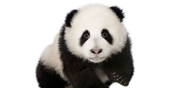 Devotion to Protect Endangered Animals, Now!