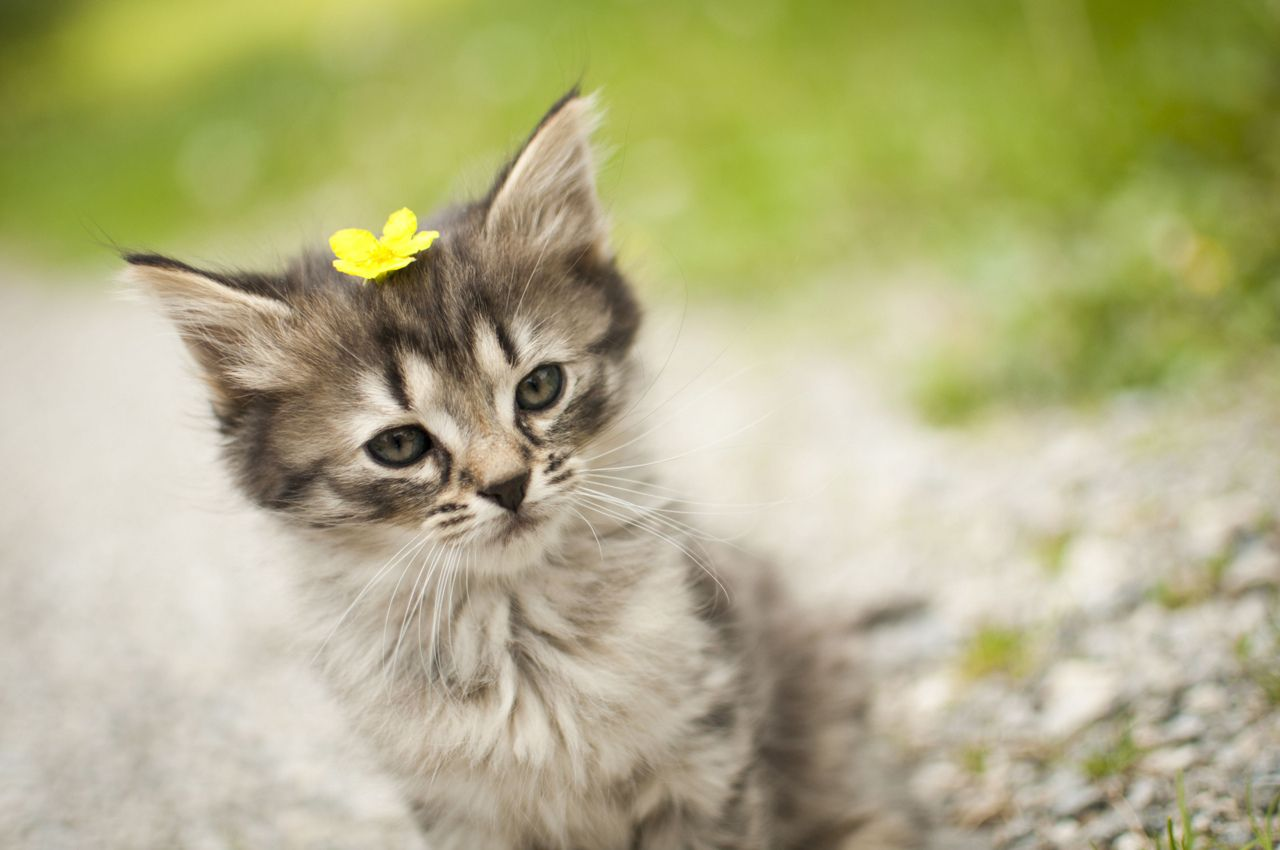 Kitten Crowned Flower Prince Of The Forest In An Baby Animals Funny Kitten Cute Animals