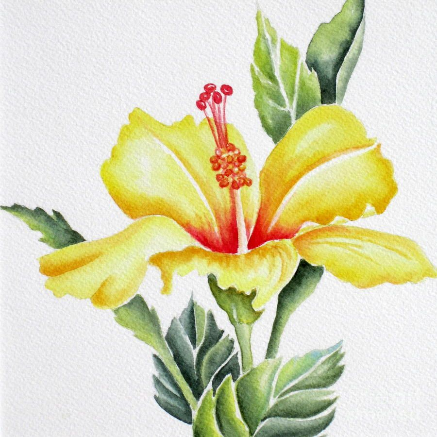 Yellow Hibiscus En 2019 Floral Beauty Real Imagined Yellow