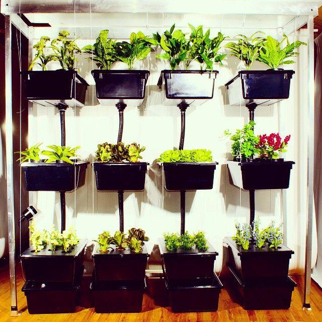 Closet King goes royale! #showyourgrow #homegrown #organic #hydrolyfe #eatingood
